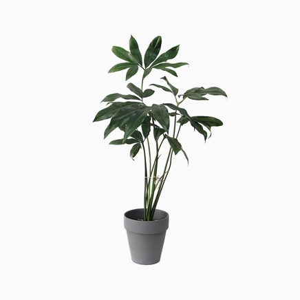 Philodendron Goeldii In Matt Grey